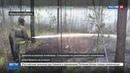 Новости на Россия 24 • Сибирские леса поливают и с земли, и с воздуха