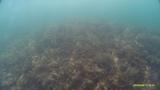 Черное море. Дикий пляж. Геленджик. В погоне за рыбкой