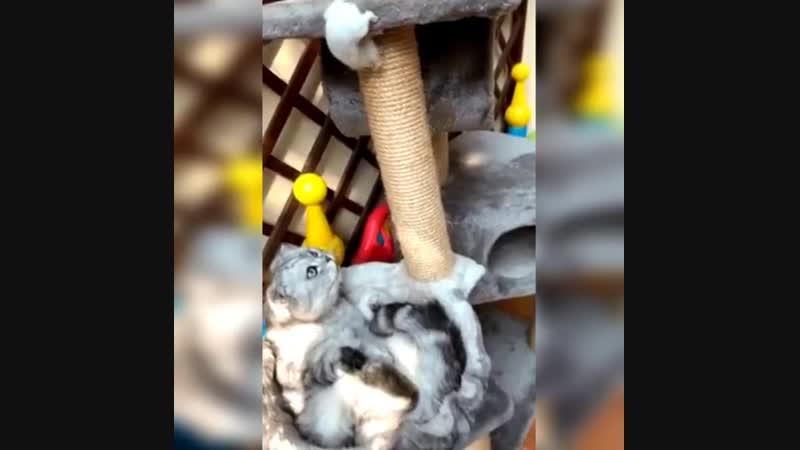 Конечно кот мышей не ловит, но и хомячок забрёл не в свой двор -)