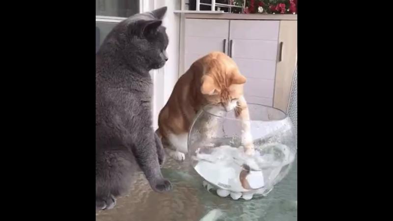 Даже не думай об этом! Рыбки наши друзья!