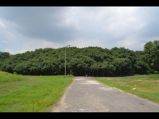The Great Banyan - Widest tree in the world at Indian Botanic Garden, Howrah, KOlkata