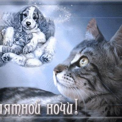 Саша Шапкин, 21 октября 1997, Москва, id195291836