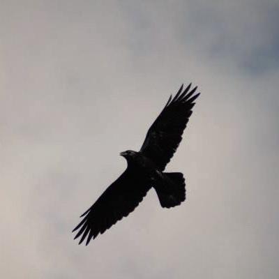 Black Crow, 21 июня , Салават, id225306662
