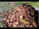 Компост из листьев и травы. Продолжение
