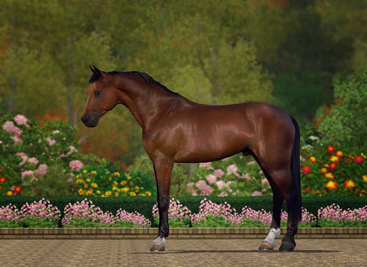Регистрация лошадей в RHF 1.1 - Страница 37 824upZDjxDg