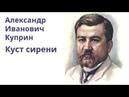 Александр Куприн Куст сирени