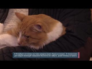 Петербургская выставка-раздача кошек: шкала мимимишности зашкаливает. ФАН-ТВ