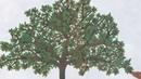 The Apple Pie Tree by Zoe Hall and Shari Halpern. Grandma Annii's Storytime