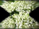 Happy Sovok Feat. Ландыши, ландыши, тюльпаны ..
