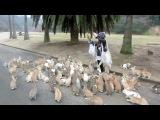 Tamada Gagik.093 86 03 38. Остров кроликов в Японии