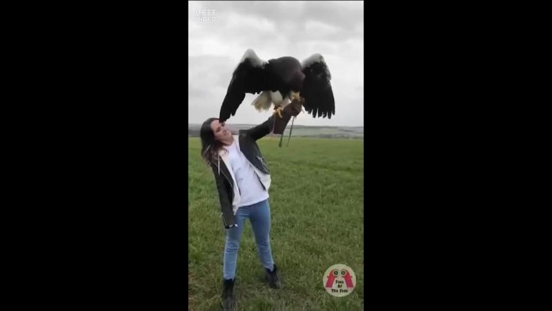 Ну ооочень большая птичка