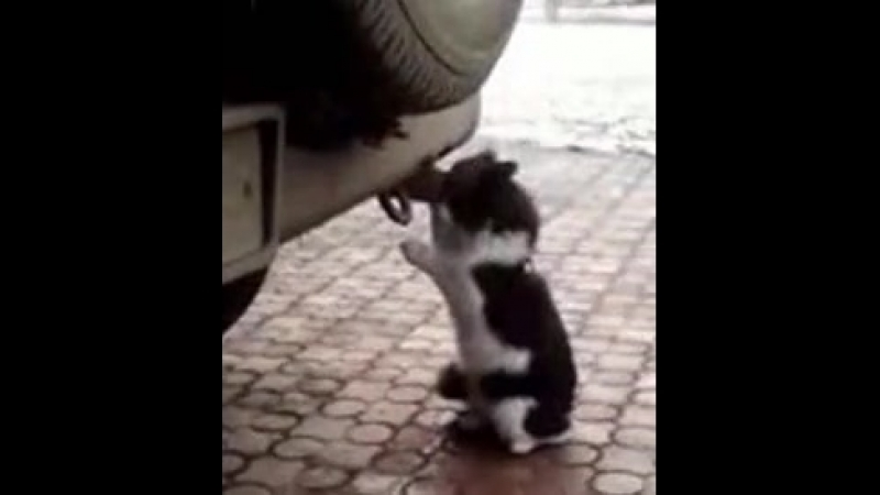 Кот токсикоман горе в семье