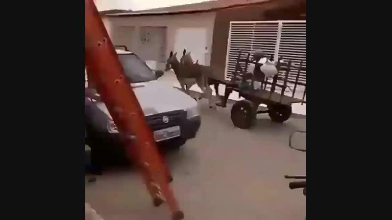 Мягко проходим лежащих полицейских