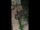 Ёжик пришёл в гости и съел у котов корм