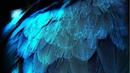 Что такое инкарнация и реинкарнация. Душа у разных существ. (Mylene Maelinhon)