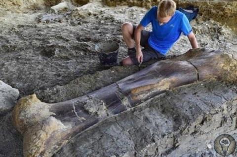 Во Франции ученые обнаружили самую большую кость зверя в истории