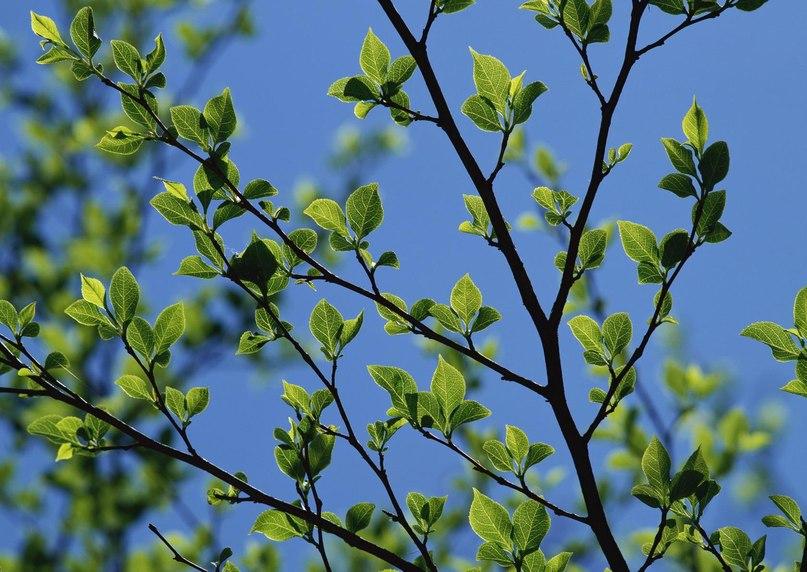 Spring time ... - Pagina 2 N9TJijBwVdU