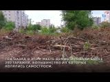 Больше десяти ив выкорчевали во Владимире