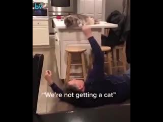 Папа «никакого кота мы заводить не будем!» и спустя некоторое время
