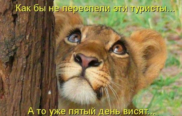 http://cs406431.vk.me/v406431795/537f/3JFasebBvvE.jpg