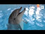 Плавание с дельфинами в Центре Дельфиния.