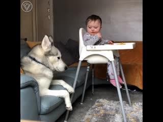 Малыш и хаски