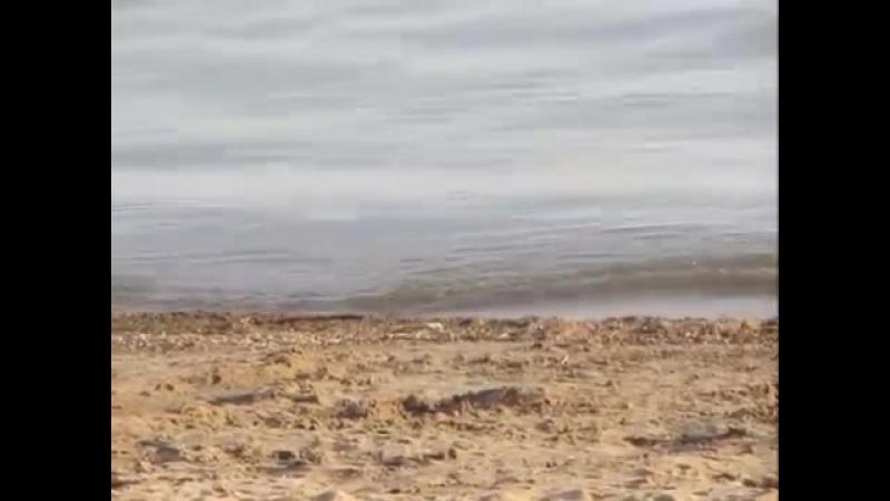 Иван Кучин - Тихий океан