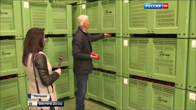 Вести 20 00 • В Польше бесплатно раздают яблоки
