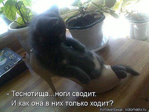 https://pp.vk.me/c613522/v613522201/d561/GP227ksewlA.jpg