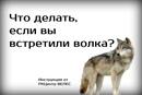 Хвостатый Копирайтер. Интересное о животных фото #4