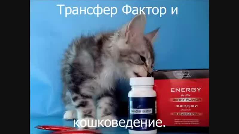 Трансфер Фактор для породистых кошек-1.mp4