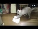 Кот моет пол и ругается
