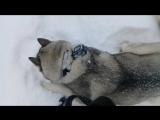 чудная зимняя прогулка(тест новой экшн камеры на haskiAiza,мое мнение по куртке Аляска)