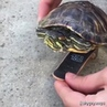 Turtle in the 90's