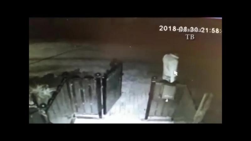 Сотрудники уголовного розыска раскрыли грабеж в Вязьме-Вязьма