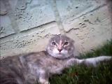 Драка котов от первого лица