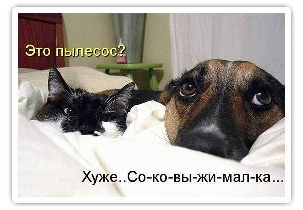 http://cs322730.vk.me/v322730447/5b86/VBa4u56bWQk.jpg