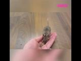 Мышки выполняют разные трюки