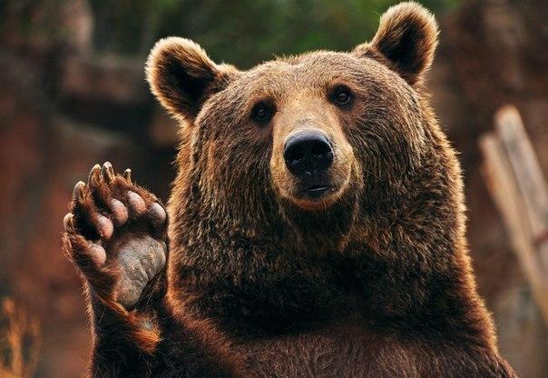 Свидание с природой. Медвежьи истории