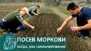 ☘ Посадка моркови с мульчированием по технологии Гордеевых