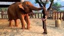 Amazing Animal Hugs