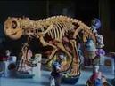 Программа Территория ТВ6 Документальный фильм Вятские Динозавры