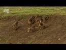 В дебрях Африки 2010 2 серия