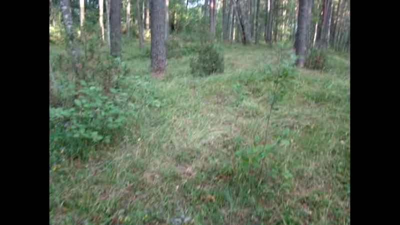 Чистый чистый лес. Через час после ливня в лесу сушь.