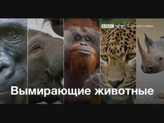5 животных, которые могут исчезнуть. Очень скоро