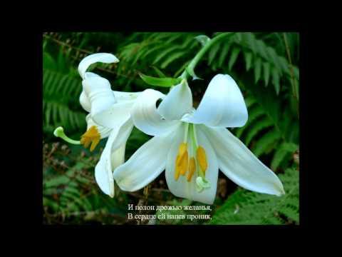 Р. Шуман. Любовь поэта. В цветах белоснежных лилий.