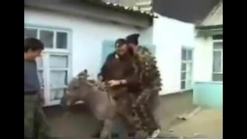 Чеченские боевики любили кататься на ослах, Аргун 2000 год.