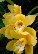 "Цветы... или моя работа. орхидеи. a href= ""http://www.liveinternet.ru/users/4029501/post285404184/ ""..."