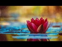 Manifest Your Desire: Meditation Music to fulfill Wish, Reprogram Your Mind