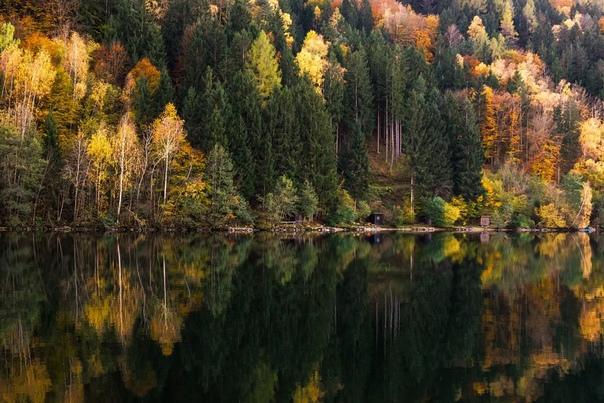 Разница между смешанными и хвойными лесами Как ясно из названия, хвойный лес это такой лес, где растут деревья хвойных пород ель, сосна, пихта и другие. А в смешанном лесу хвойные и лиственные